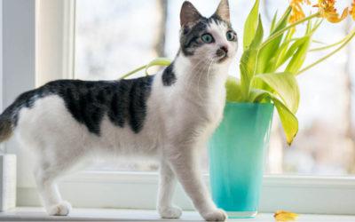 Pretty but Poisonous Plants to Pets
