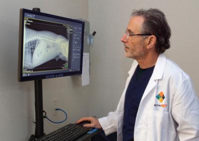 Emergency Veterinarian in NE Portland - Dr. Flecker in radiology